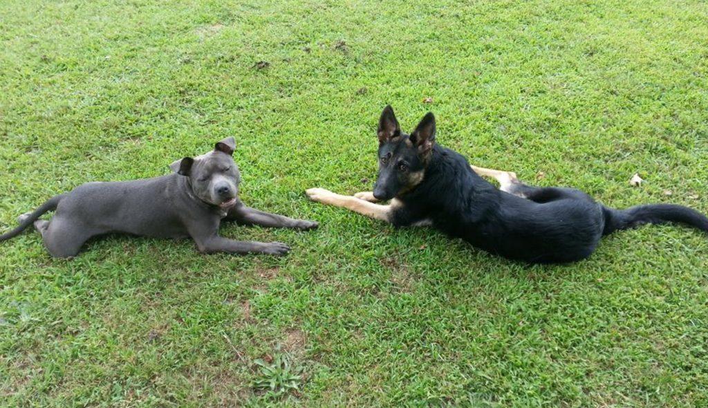 Fido's Retreat Kennel